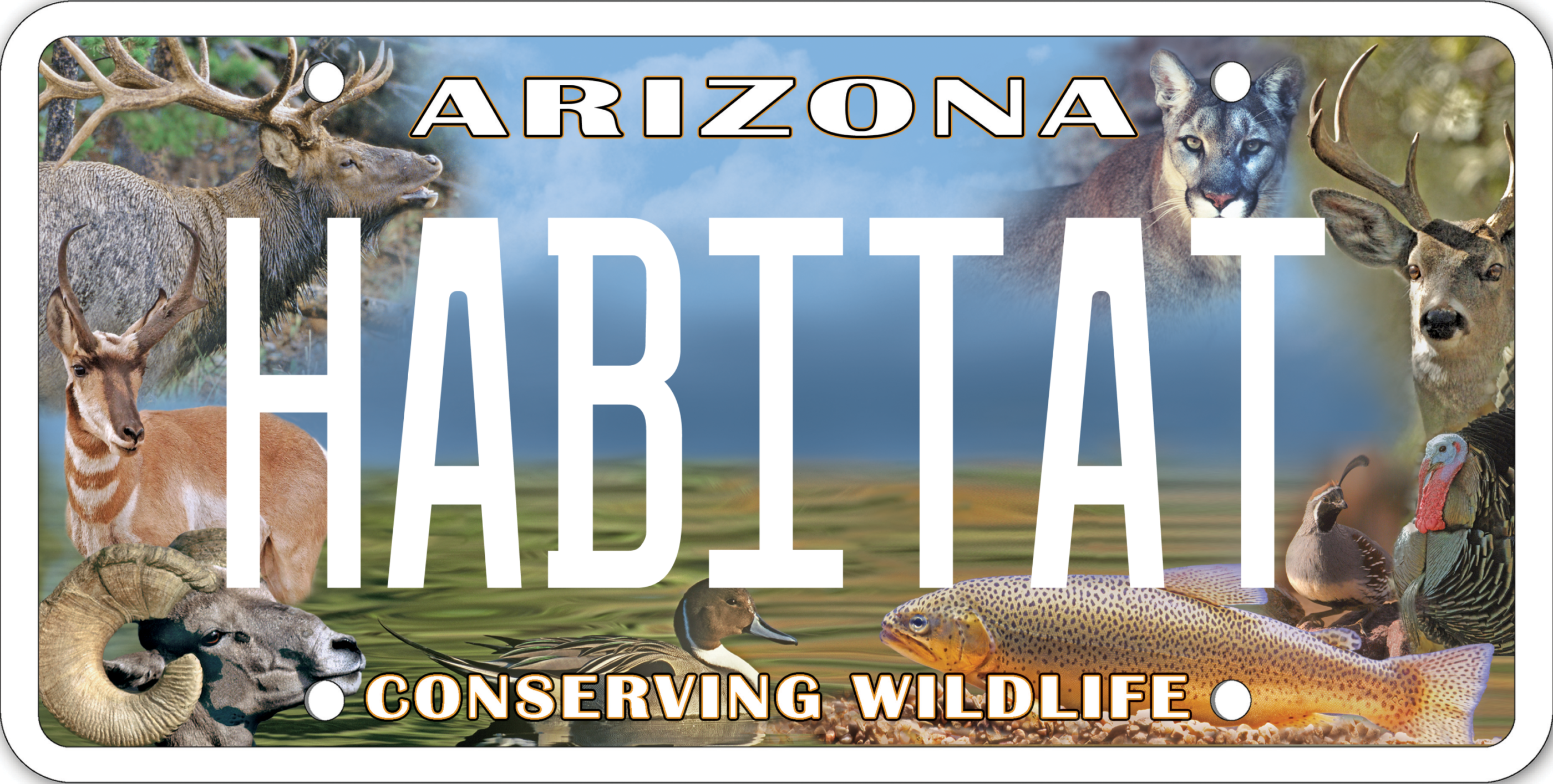 AZSFWC Conservation License Plate Image